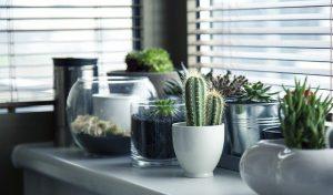 עיצוב דירה שכורה: איך להפוך את הדירה שלכם לפנינת עיצובית?